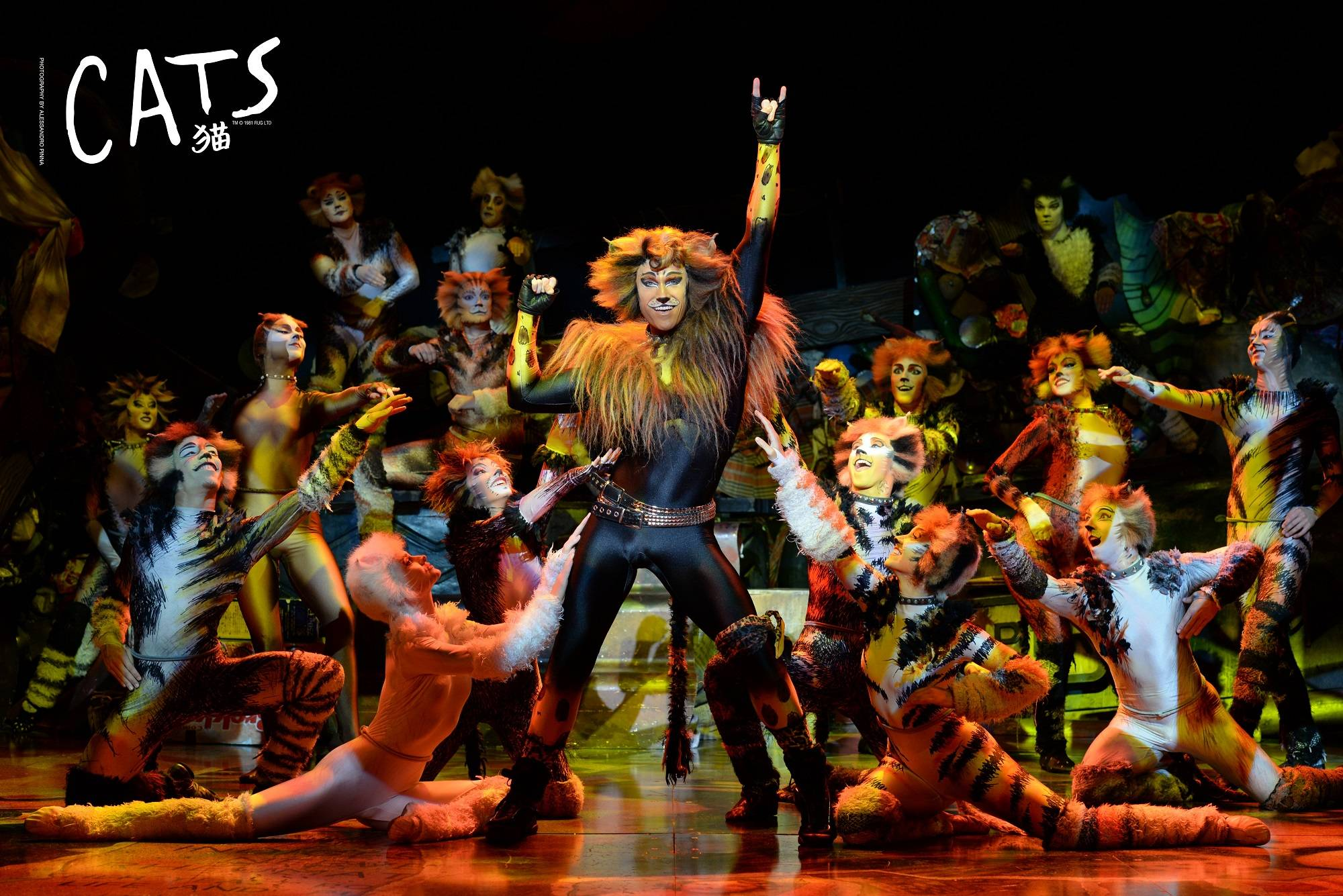 Buy Cats the Musical Stage Tickets Shanghai