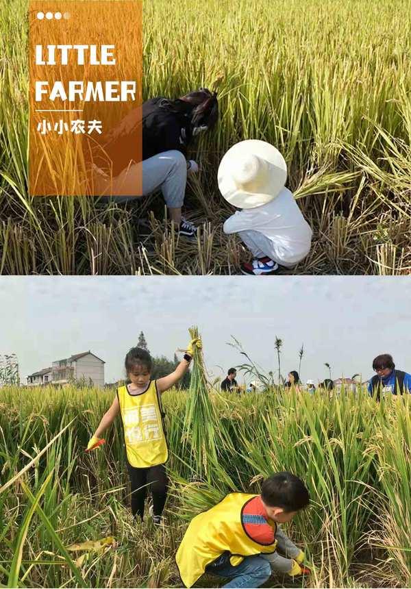 Shengfei Farm - Little Farmer